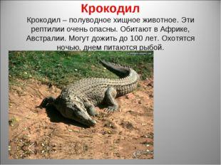 Крокодил Крокодил – полуводное хищное животное. Эти рептилии очень опасны. Об