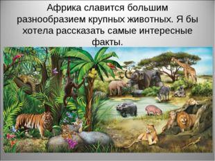 Африка славится большим разнообразием крупных животных. Я бы хотела рассказат