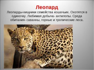 Леопард Леопарды-хищники семейства кошачьих. Охотятся в одиночку. Любимая доб