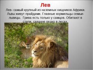 Лев Лев- самый крупный из наземных хищников Африки. Львы живут прайдами. Глав