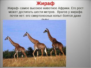 Жираф Жираф- самое высокое животное Африки. Его рост может достигать шести ме
