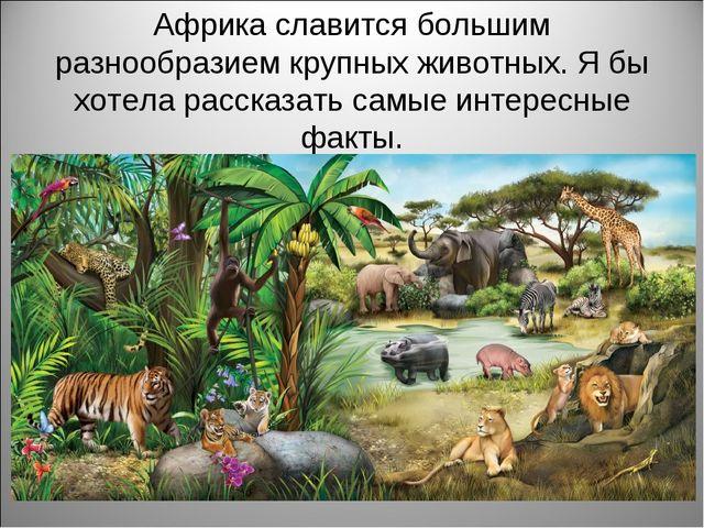 Африка славится большим разнообразием крупных животных. Я бы хотела рассказат...