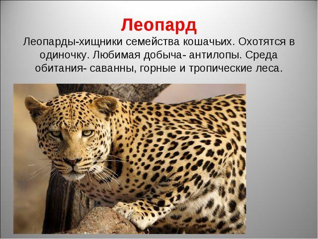 Леопард Леопарды-хищники семейства кошачьих. Охотятся в одиночку. Любимая доб...