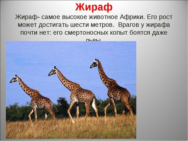 Жираф Жираф- самое высокое животное Африки. Его рост может достигать шести ме...