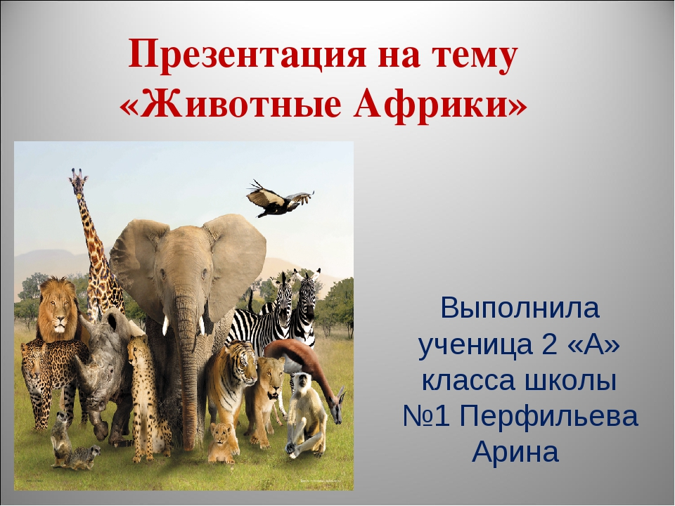 Презентация на тему «Животные Африки» Выполнила ученица 2 «А» класса школы №1...