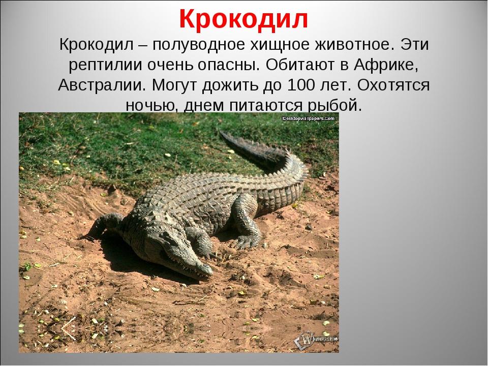 Крокодил Крокодил – полуводное хищное животное. Эти рептилии очень опасны. Об...