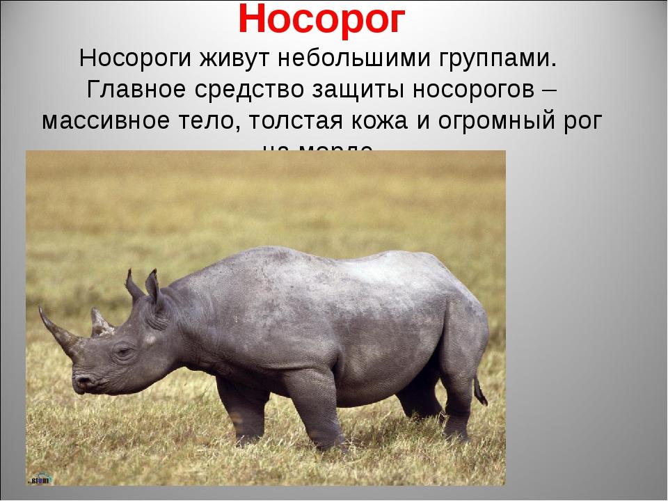 Носорог Носороги живут небольшими группами. Главное средство защиты носорогов...