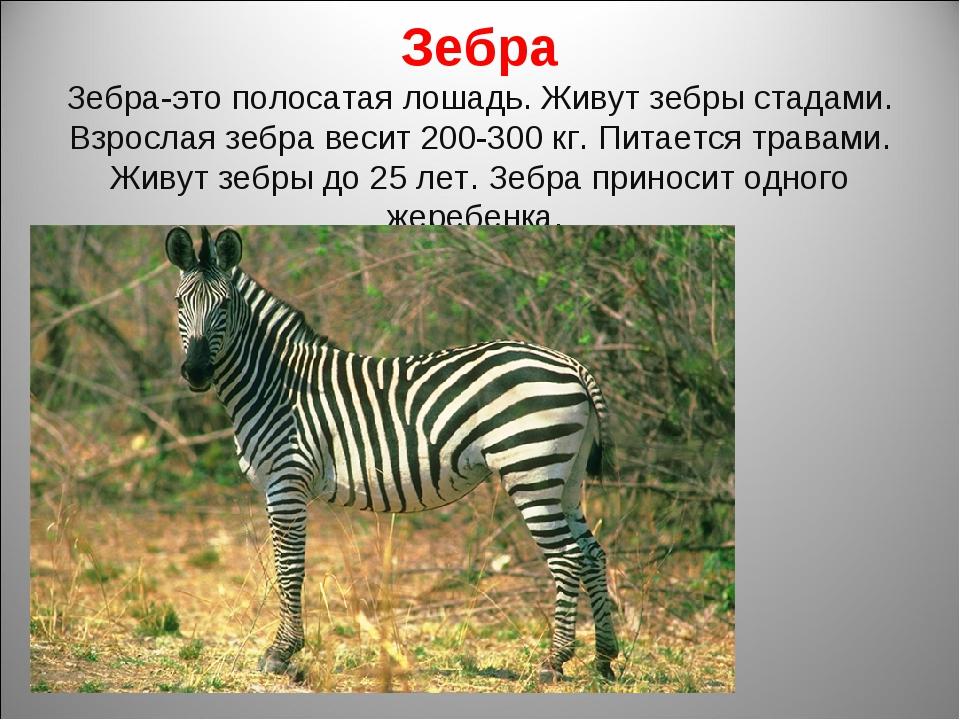Зебра Зебра-это полосатая лошадь. Живут зебры стадами. Взрослая зебра весит 2...