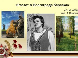 «Растет в Волгограде березка» сл. М. Агашиной, муз. А.Пономаренко