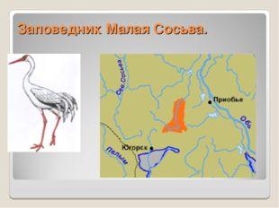 Заповедник Малая Сосьва.