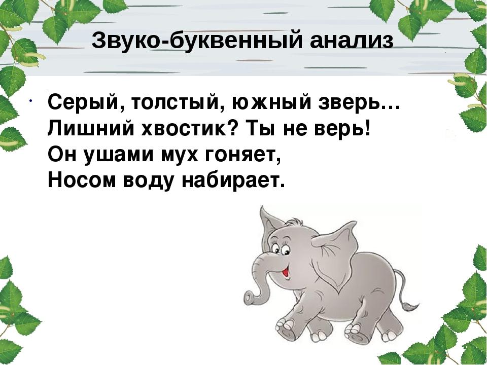 Серый, толстый, южный зверь… Лишний хвостик? Ты не верь! Он ушами мух гоняет,...