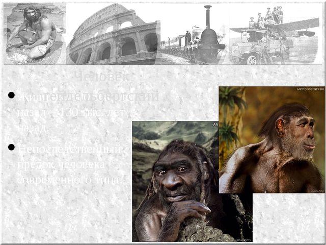 Жили ок. 800 тыс. лет назад – 130 тыс. лет назад. Непосредственный предок чел...