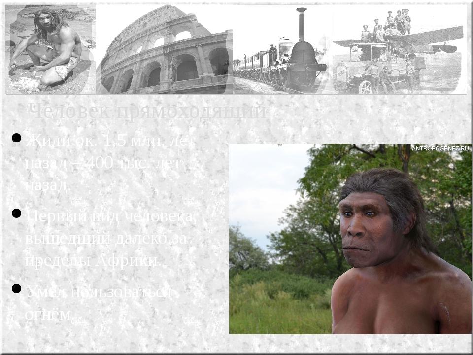 Жили ок. 1,5 млн. лет назад – 400 тыс. лет назад. Первый вид человека, вышедш...