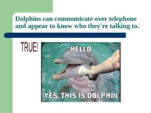 Dolphins can communicate over telephone and appear to know who they're talkin