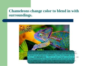 Chameleons change color to blend in with surroundings. Chameleon color-changi