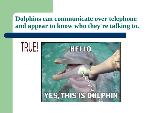Dolphins can communicate over telephone and appear to know who they're talkin...