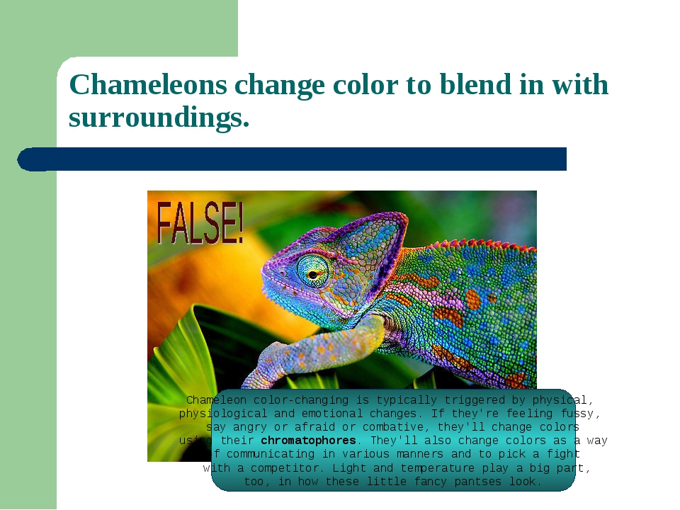 Chameleons change color to blend in with surroundings. Chameleon color-changi...