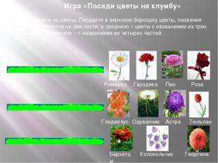 Игра «Посади цветы на клумбу» Посмотрите на цветы. Посадите в верхнюю бороздк