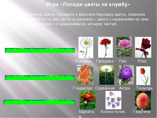 Игра «Посади цветы на клумбу» Посмотрите на цветы. Посадите в верхнюю бороздк...
