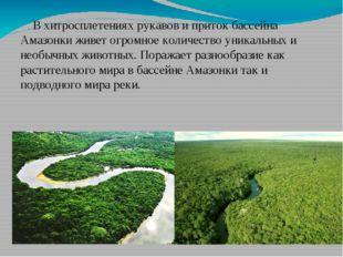 В хитросплетениях рукавов и приток бассейна Амазонки живет огромное количест
