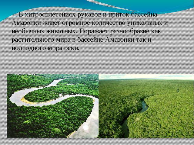 В хитросплетениях рукавов и приток бассейна Амазонки живет огромное количест...