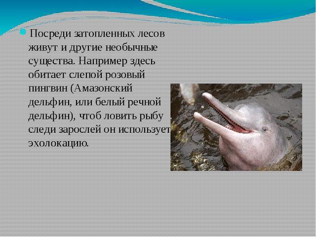 Посреди затопленных лесов живут и другие необычные существа. Например здесь...