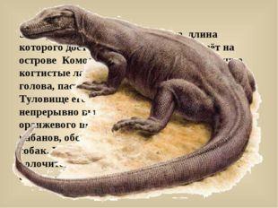 Это чудовище похоже на дракона, длина которого достигает почти 3 метра, живёт