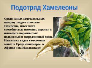 Среди самых замечательных ящериц следует отметить хамелеона, известного спосо