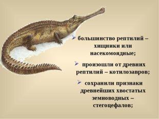 большинство рептилий – хищники или насекомоядные; произошли от древних рептил