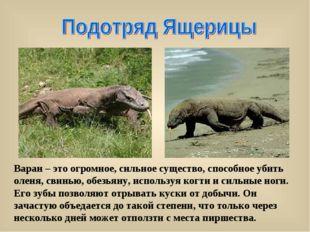 Варан – это огромное, сильное существо, способное убить оленя, свинью, обезья