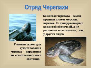 Главная угроза для существования черепах – нарушение их естественных мест об