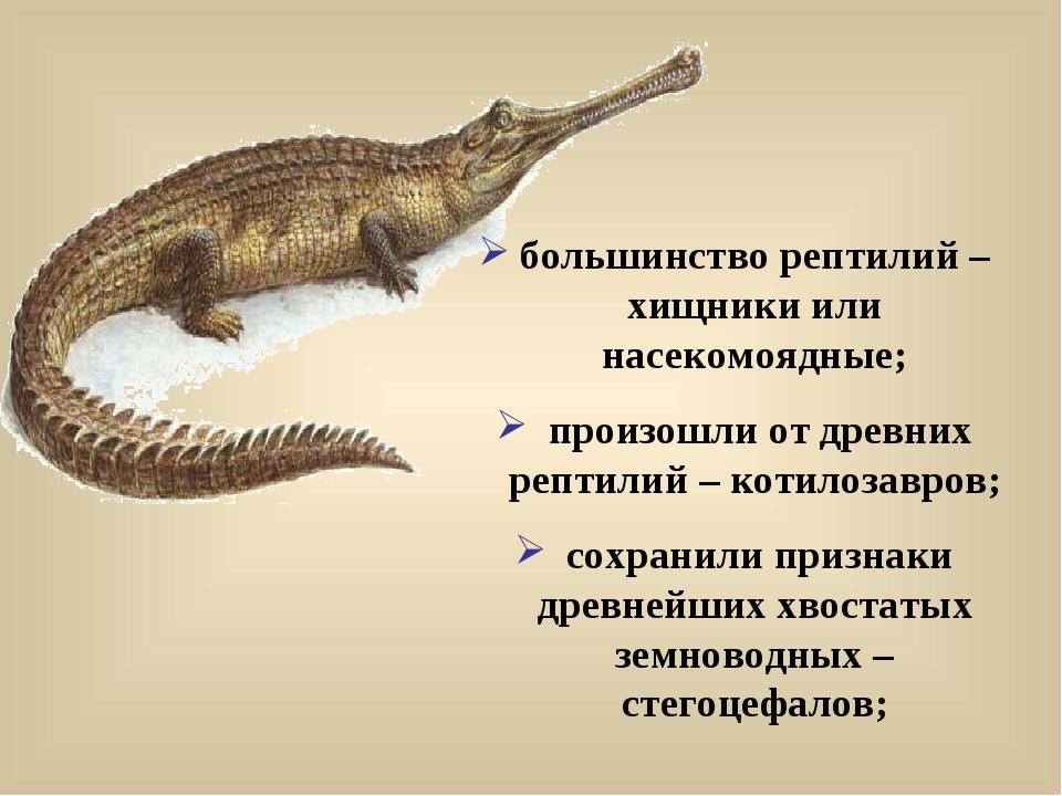 большинство рептилий – хищники или насекомоядные; произошли от древних рептил...