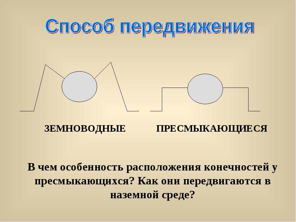 В чем особенность расположения конечностей у пресмыкающихся? Как они передвиг...
