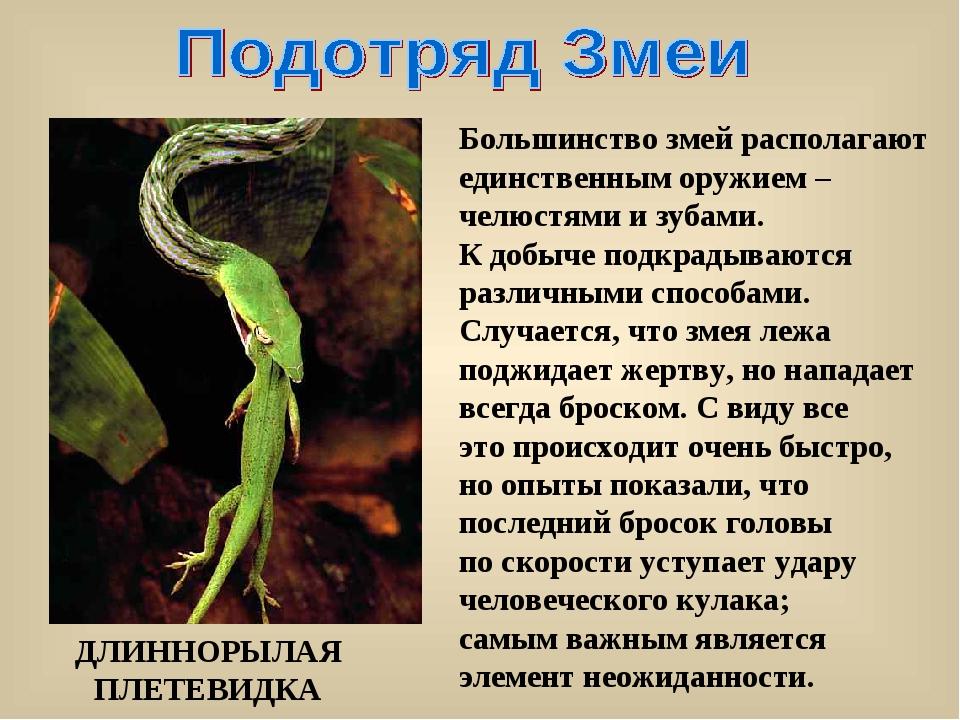 Большинство змей располагают единственным оружием – челюстями и зубами. К доб...