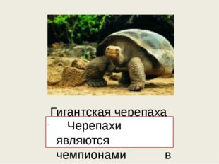 Гигантская черепаха Черепахи являются чемпионами в плане долголетия среди вс