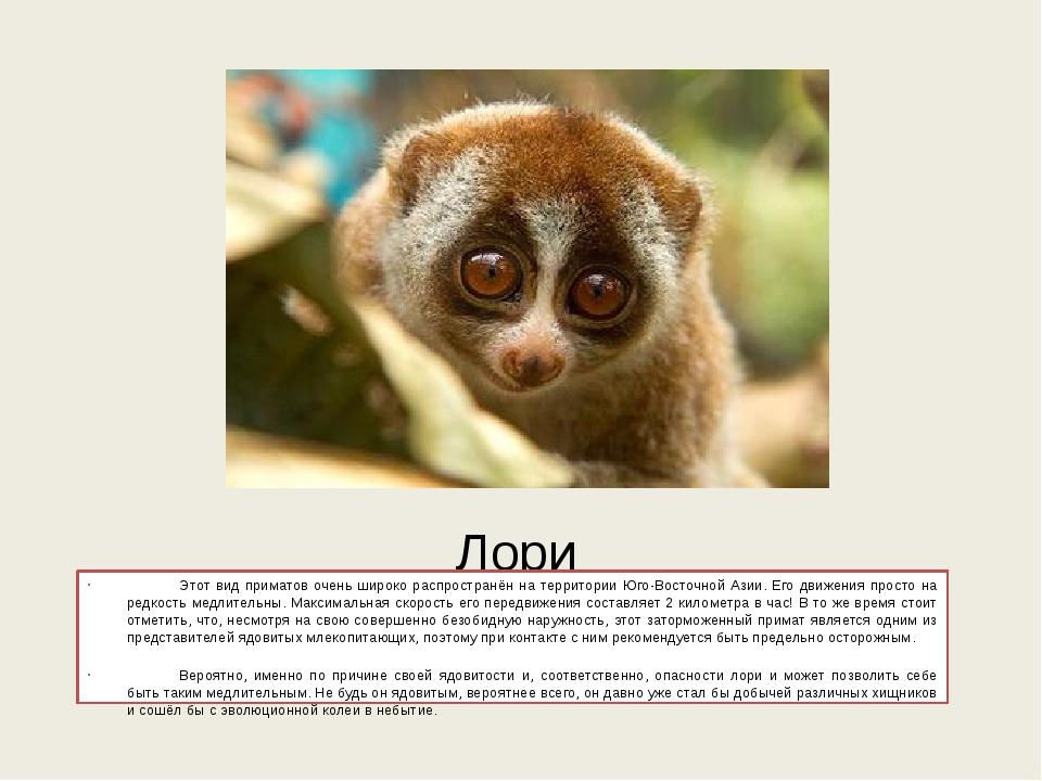 Лори Этот вид приматов очень широко распространён на территории Юго-Восточно...