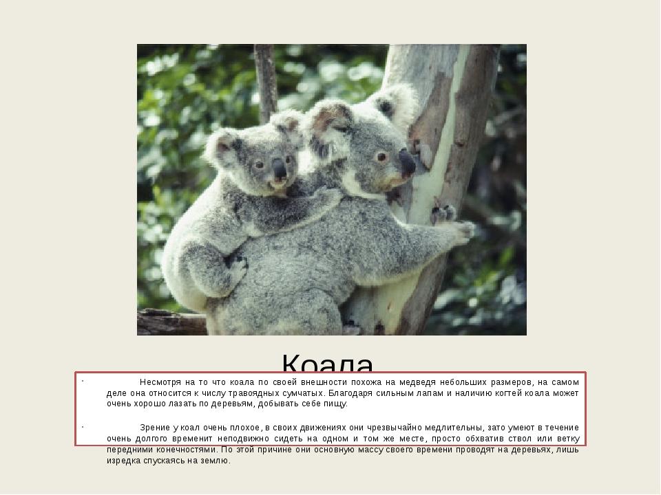 Коала Несмотря на то что коала по своей внешности похожа на медведя небольши...