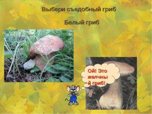 Выбери съедобный гриб Белый гриб Ой! Это желчный гриб!