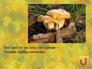 Вот растут во мху сестрички – Рыжие грибы-лисички.