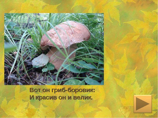 Вот он гриб-боровик: И красив он и велик.