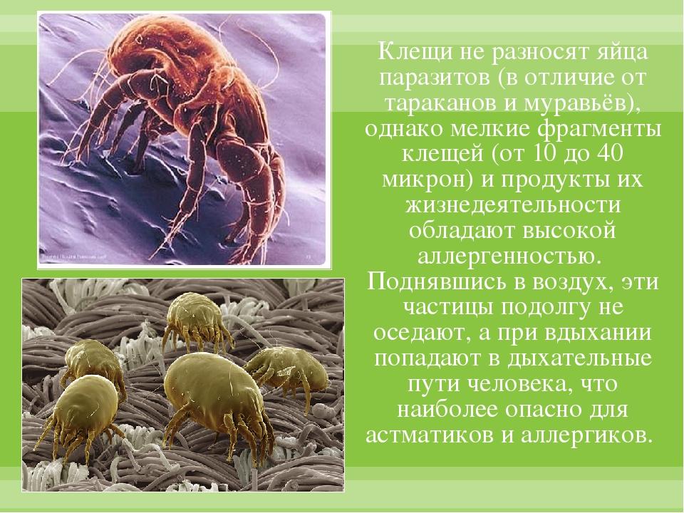Клещи не разносят яйца паразитов (в отличие от тараканов и муравьёв), однако...