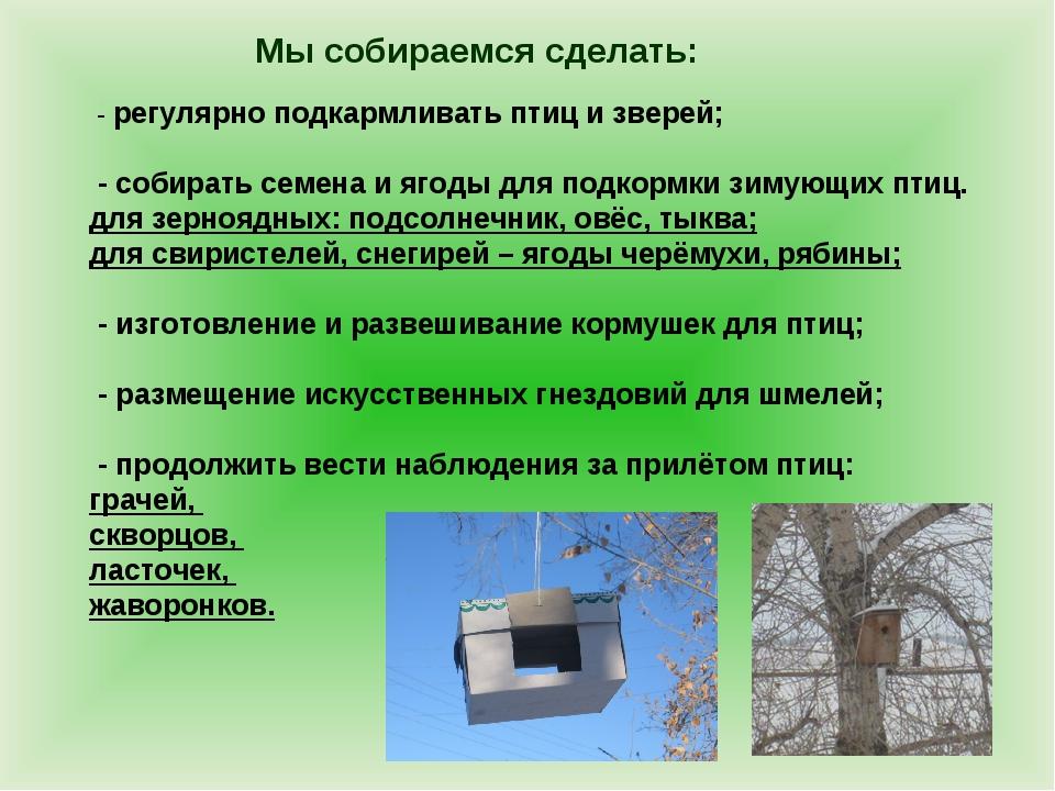 Мы собираемся сделать: - регулярно подкармливать птиц и зверей; - собирать се...