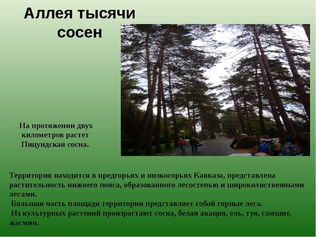 Аллея тысячи сосен Территория находится в предгорьях и низкогорьях Кавказа, п...