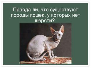 Правда ли, что существуют породы кошек, у которых нет шерсти?
