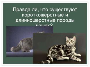 Правда ли, что существуют короткошерстные и длинношерстные породы кошек?