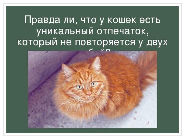 Правда ли, что у кошек есть уникальный отпечаток, который не повторяется у дв...