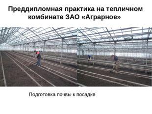 Преддипломная практика на тепличном комбинате ЗАО «Аграрное» Подготовка почвы