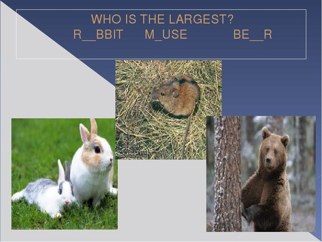WHO IS THE LARGEST? R__BBIT M_USE BE__R