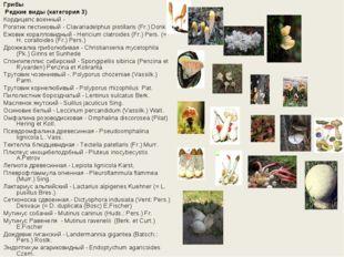 Грибы Редкие виды (категория 3) Кордицепс военный - Рогатик пестиковый - Cla