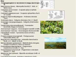 Мхи Сокращающиеся в численности виды (категория 2) Марсупелла Функа - Marsup